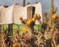 Сцена ковбоя Диких Западов пустыни стоковое фото rf