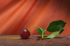 Сцена конспекта вишни натюрморта Стоковое Фото