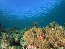 Сцена кораллового рифа Стоковое Изображение RF