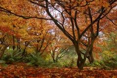Сцена красоты осени Стоковое Изображение RF