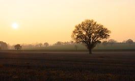 Сцена ландшафта зимы, заход солнца, золотой час стоковое фото