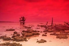 Сцена на скалистом пляже Стоковая Фотография