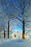 Сцена ночи ландшафта зимы - дезертированная снежная дорожка между снежными деревьями в ноче Стоковые Изображения