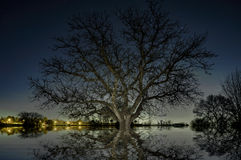 Сцена ночи дерева Стоковое Изображение