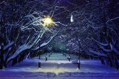 Сцена ночи парка зимы Стоковое фото RF