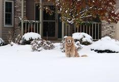 Сцена дня снега зимы Стоковое фото RF