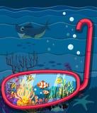 Сцена океана с морскими животными Стоковая Фотография