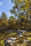 Сцена осени в лесе Фонтенбло стоковые фото