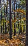 Сцена осени в лесе Фонтенбло стоковое изображение rf