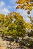 Сцена осени в лесе Фонтенбло стоковое изображение