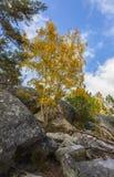 Сцена осени в лесе Фонтенбло стоковые изображения