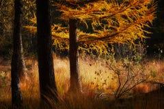 Сцена осени в темном лесе Стоковые Фотографии RF