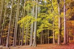 Сцена осени леса стоковые изображения rf