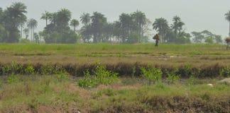 Сцена от Гвинеи-Бисау Стоковое фото RF