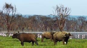 Сцена от Кении Стоковое Изображение RF