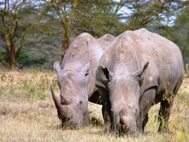 Сцена от Кении Стоковые Изображения