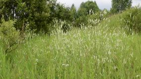 Сцена одичалой травы луга сток-видео