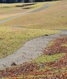 Сцена падения с листьями стоковая фотография rf