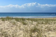Сцена пляжа переднего плана песчанной дюны стоковое изображение