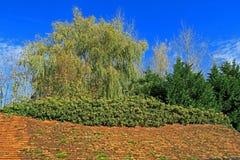 Сцена полесья старой крыть черепицей черепицей крыши и зеленых деревьев Стоковая Фотография RF