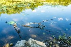 Сцена природы на реке Des Milles Iles стоковые фотографии rf