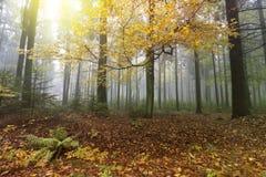 Сцена природы леса осени стоковая фотография