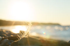 Сцена природы на заходе солнца Стоковые Изображения RF