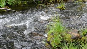 Сцена природы свежей воды потока сток-видео