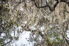 Сцена природы Стоковое Фото