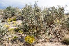 Сцена пустыни национального парка Cibola исключительная Стоковые Фото