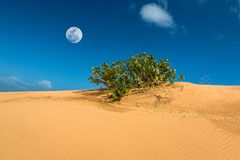Сцена пустыни с песчанной дюной, Бушем и полнолунием на накидке Dinh, провинции Ninh Thuan, Вьетнаме стоковое изображение rf