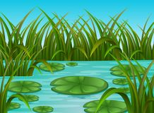 Сцена реки и лилия воды в красивой природе Стоковые Фотографии RF