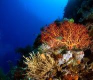 Сцена рифа Стоковая Фотография RF
