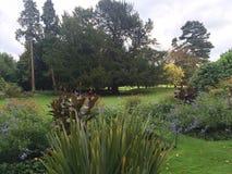 Сцена сада Стоковая Фотография RF