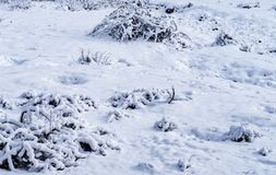 Сцена сельской местности со снежным лесом стоковое фото rf