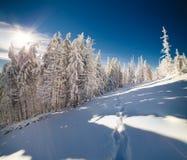 Сцена сказки зимы в лесе горы Стоковые Фото
