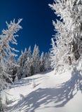 Сцена сказки зимы в лесе горы Стоковая Фотография