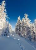 Сцена сказки зимы в лесе горы Стоковые Фотографии RF