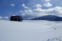 Сцена снега в Японии Стоковые Изображения RF