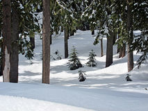 Сцена снега клобука Mt в лесе Стоковые Фото