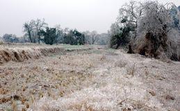 Сцена снега Стоковое Изображение RF