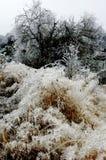 Сцена снега Стоковая Фотография RF