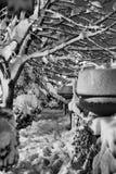 Сцена снега Стоковые Фотографии RF