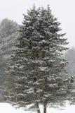 Сцена снега Стоковое Фото