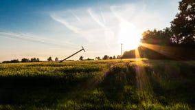 Сцена спокойного вечера сельская зеленого кукурузного поля на заходе солнца стоковое изображение rf