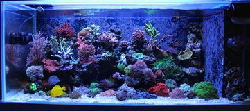 Сцена танка аквариума кораллового рифа Стоковое фото RF