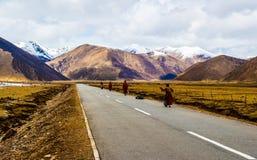 Сцена тибетского плато стоковое изображение rf
