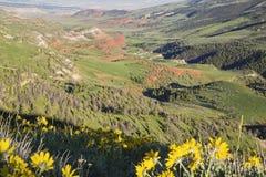 Сцена травы луга красной горной породы открытая Стоковое фото RF