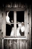 Сцена ужаса страшной женщины Стоковые Фото
