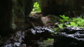 Сцена укладки в форме пещеры Центральной Америки джунглей сползая сток-видео